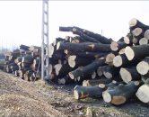 drewno – sprzedaż
