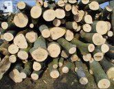 drewno – sprzedaż2