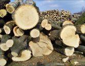 drewno – sprzedaż4